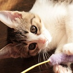 猫を飼う前・飼った直後に知っておきたい11のこと