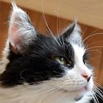 猫に薬を飲ませる時に役立つアイテム10コ紹介します!