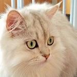 猫の保険は入る方がいいのか、猫飼い10年目の私が本気で考えてみた