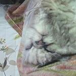 愛猫の写真をプリントしてオリジナルブランケットを作成してみた