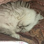 猫が腎臓病になると治療費はどれくらいかかるの?我が家の場合