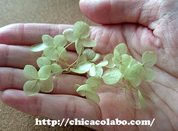 ajisa-green-iro-sm