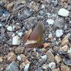 11月なのにチューリップの芽が出てきた!対処しておきました
