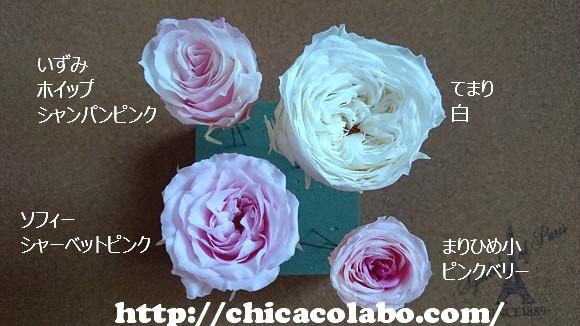 rose-4syu-sm