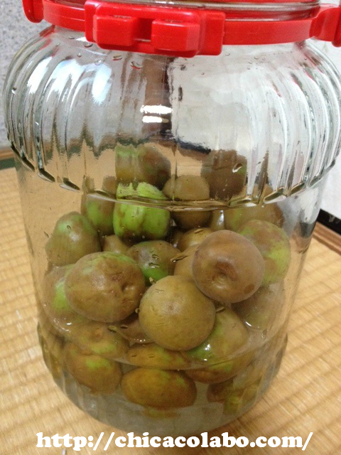 梅シロップ作り2日目