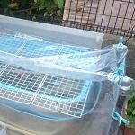 屋外メダカ&エビ用にビニールで簡易温室を手作り。越冬対策したよ