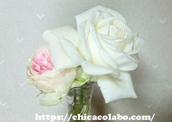 パシュミナとビブラマリエ!の花