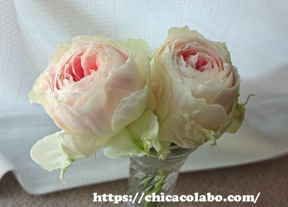 パシュミナローズを花瓶に生ける