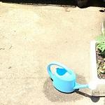 庭がコンクリートの照り返しで超暑い!対策を6通り考えてみた