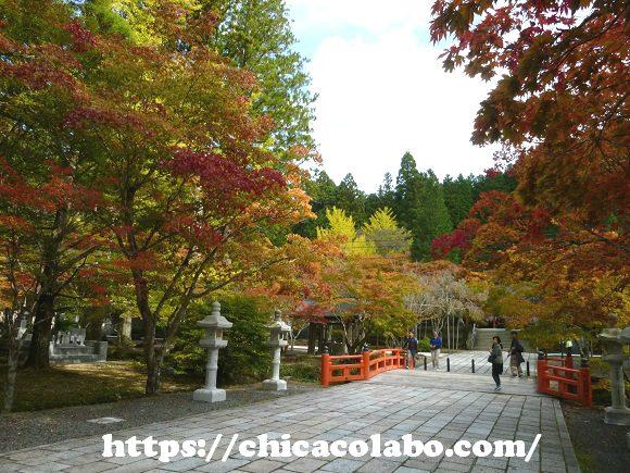 高野山奥の院の紅葉