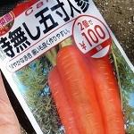ダイソーの時無し五寸人参を種から栽培してみた。種まき~52日後